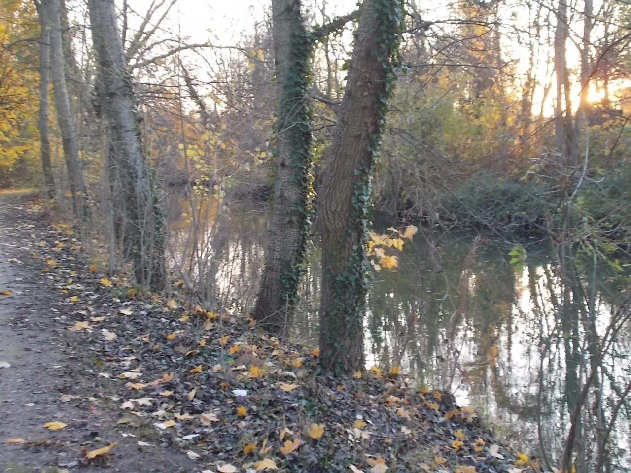 Les bords de l'Orge à Savigny